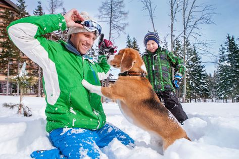 Ski holiday with your dog